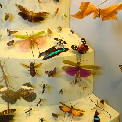 A display of preserved insects.